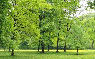 Kommunen erhalten mehr Spielraum beim Baumschutz